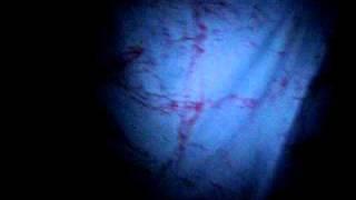 Socorro Haunted House/Chamber of Fears
