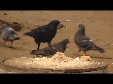 Видео Против апетит