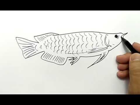 Cara Menggambar Ikan Arwana Dalam 1 Menit Saja Mudah Sekali Youtube