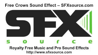 Free Crows Sound Effect - SFXsource