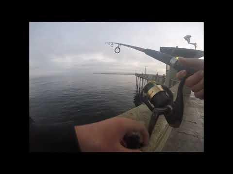 Ocean Beach Pier  Fishing 4 Bonito!