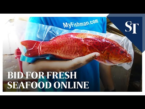 Bid For Fresh Seafood Online | The Straits Times