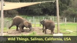 Salinas Wild Things