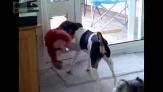 приколы с животными смотреть бесплатные видео приколы онлайн
