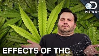 How THC Replaces Your Brain's Neurotransmitters