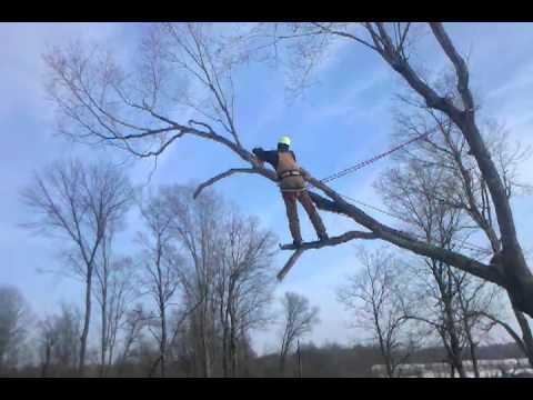 Aaron Wheat displaying a bit of tree magic
