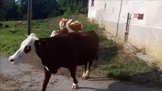 TRAITE EP1:On rentre les vaches / Lavage des machines