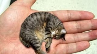 13 Smallest Animals In The World thumbnail
