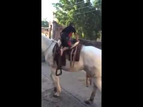 طفل يركب حصان