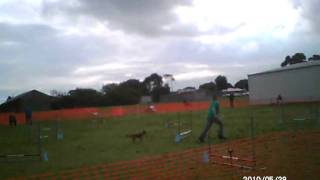 Nadac Agility Elitejumpers2q Border Terrier May2010.avi