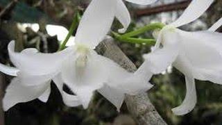 Những loài hoa lan rừng có giá đắt đỏ hiện nay đang được nhiều người săn lùng