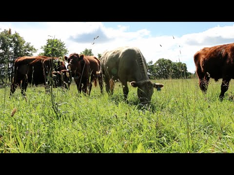 The Healthy Butcher visits Pure Island Grassfed Beef in Manitoulin Island