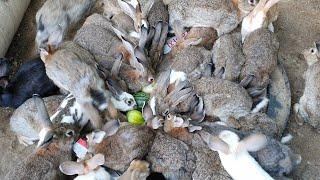 남자토끼(rabbit)만 모여있는 훈련소에 참외 수박 …