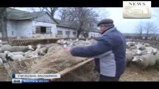 Новости Украины Сегодня Родное село Порошенко,Гагаузия Молдова без России никуда