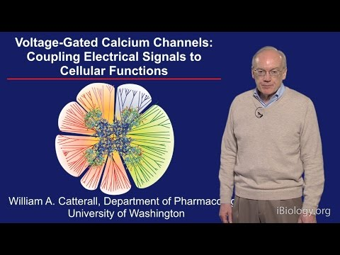 William Catterall (U. Washington) Part 3: Voltage-gated Calcium Channels