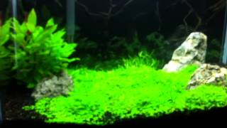 10g planted tank update 5