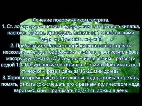 Лечение желудка народными средствами-Лечение травами