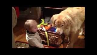 Golden Retriever Shares Toys with Baby