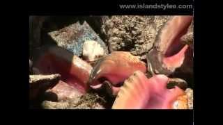 Island Stylee explores Nassau!