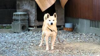 """本名""""ジョン""""。とても用心深い性格のため、優秀な番犬。別名""""セコム""""!?"""