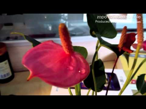 zopo C2 video sample show fish tank