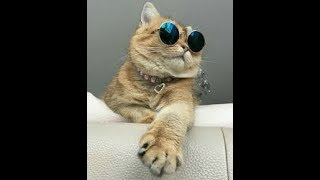 cute dogs and cats doing funny things 2019 funny cats and dogs videos