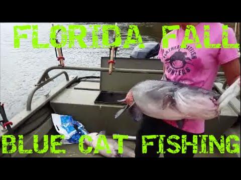 Catfishing In Florida