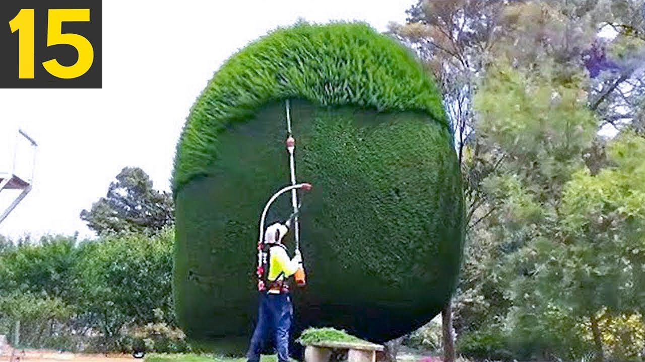 15 Amazing Hedges and Landscaping Work