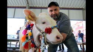 Gambar cover Kelkit'te 10.Organik Tarım ve Hayvancılık Festivali yapıldı