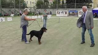 породы собак ротвейлер