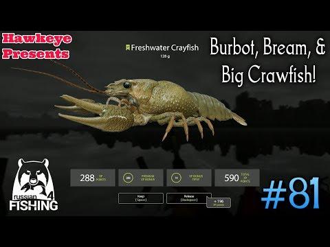 Russian Fishing 4 | #81 | Burbot, Bream, & Big Crawfish!