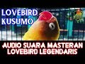 Audio Suara Masteran Lovebird Legendaris Ki Kusumo Ngekek Panjang Ngriwik(.mp3 .mp4) Mp3 - Mp4 Download