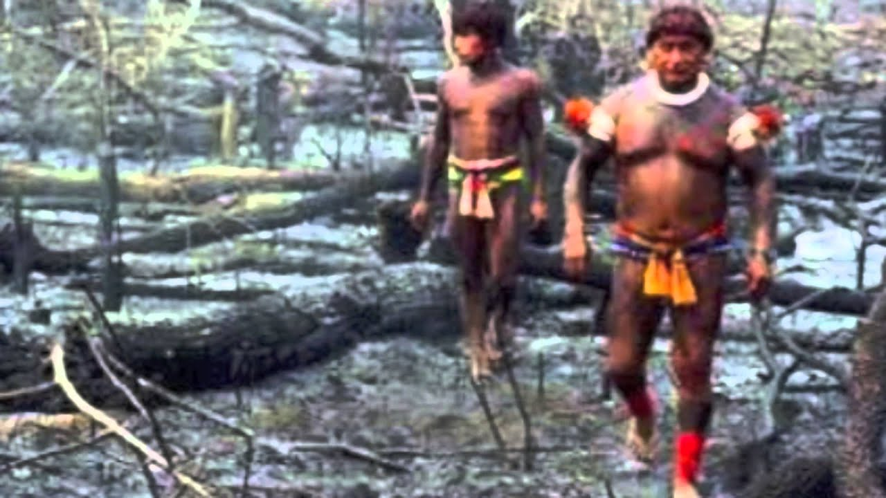 Rainforest Deforestation Music Video - YouTube