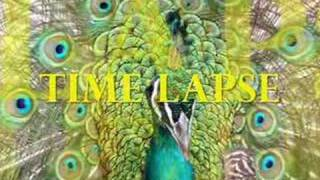 Time Lapse - Composer :  Michael Nyman - 1985 - Cover