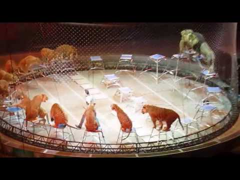 Ringling Bros.Tigers and Lions