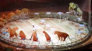 Download Ringling Bros.Tigers and Lions Mp3 and Videos