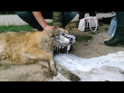 poisoned animal in kavadarci