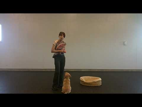 No jumping on me and go to your bed - Puppy/Dog Training