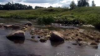Нахлыст в Калининградской области Голавль Лето 2019