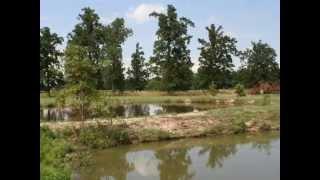 Ridgemark Retrievers - Kennel And Grounds