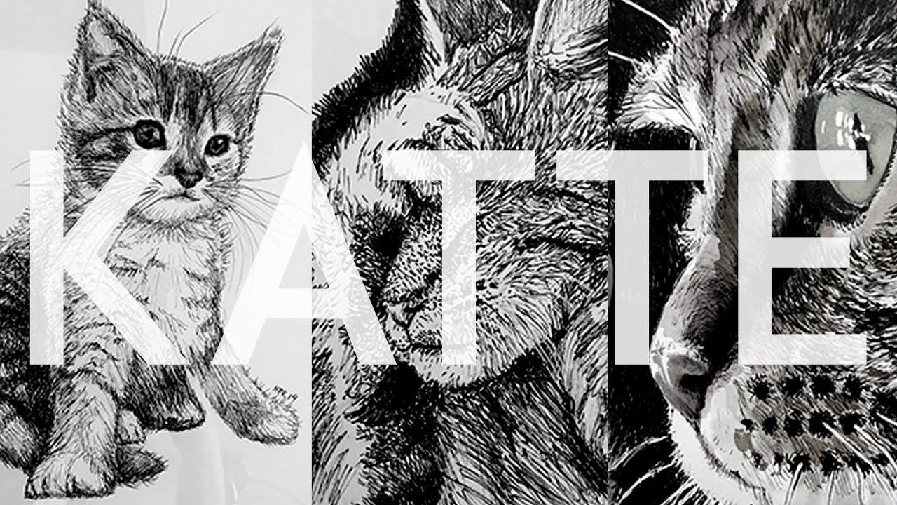 Lær at Tegne KATTE