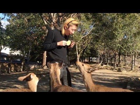 【凶暴】ジョンレノが奈良公園の鹿にエサをあげてみた結果…