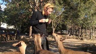 【凶暴】ジョンレノが奈良公園の鹿にエサをあげてみた結果… thumbnail
