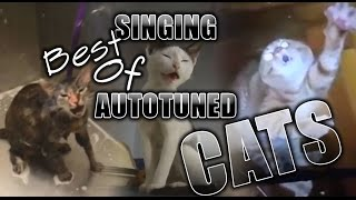 Autotuned cats