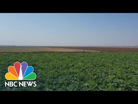 Farmers In Battleground Arizona Speak Out On Presidential Race | NBC Nightly News