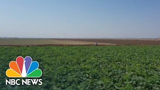 Farmers In Battleground Arizona Speak Out On Presidential Race   NBC Nightly News