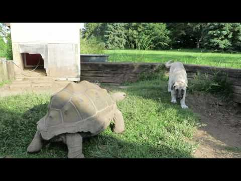 Tortoise and the Puppy