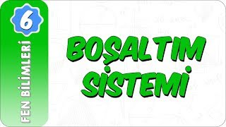6. Sınıf Fen Bilimleri  Boşaltım Sistemi