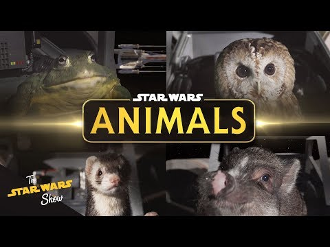 "Star Wars Animals ""The Trench Run"" 