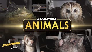 Star Wars Animals The Trench Run | The Star Wars Show